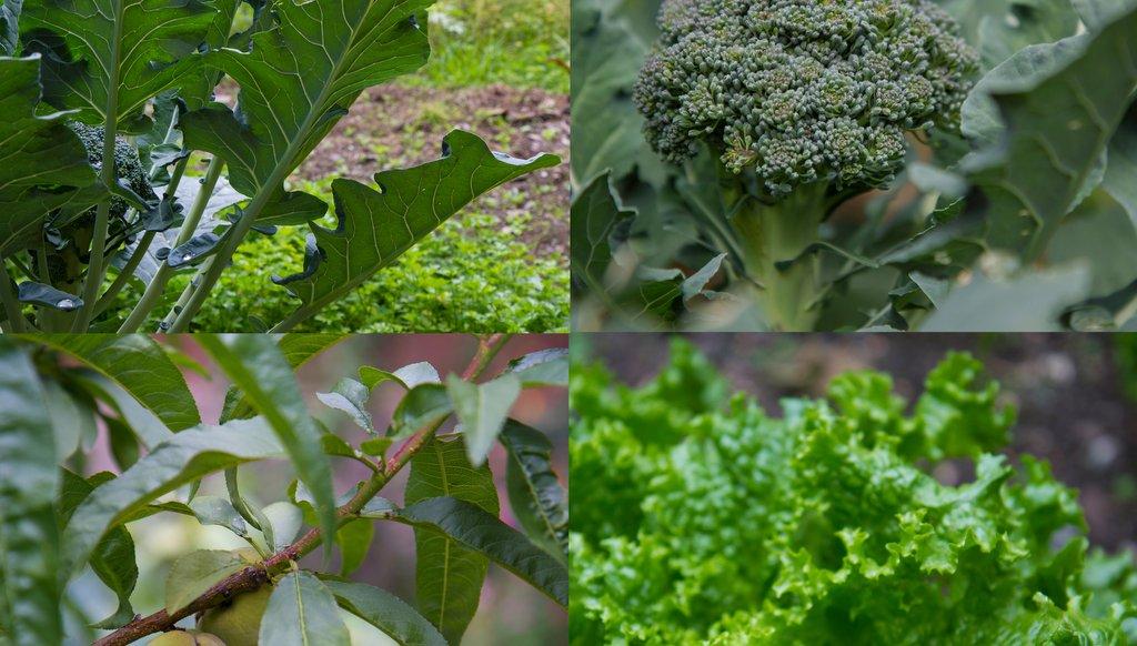 Veg in garden